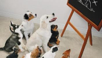 Comment avez vous connu notre levage levage canin r a sarthe 72 - Salon du chiot ville la grand ...